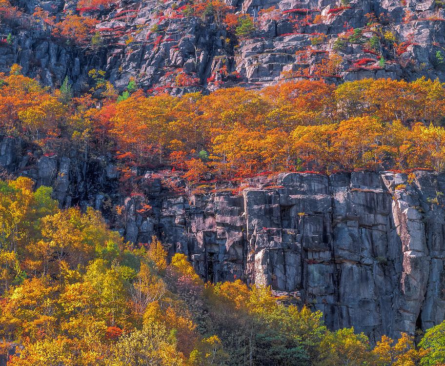 Precipice Ledges in fall, nesting area of Peregrine Falcon on rocky cliffs, Acadia National Park, ME
