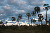 PARQUE NACIONAL EL PALMAR, PROV. DE ENTRE RIOS, ARGENTINA