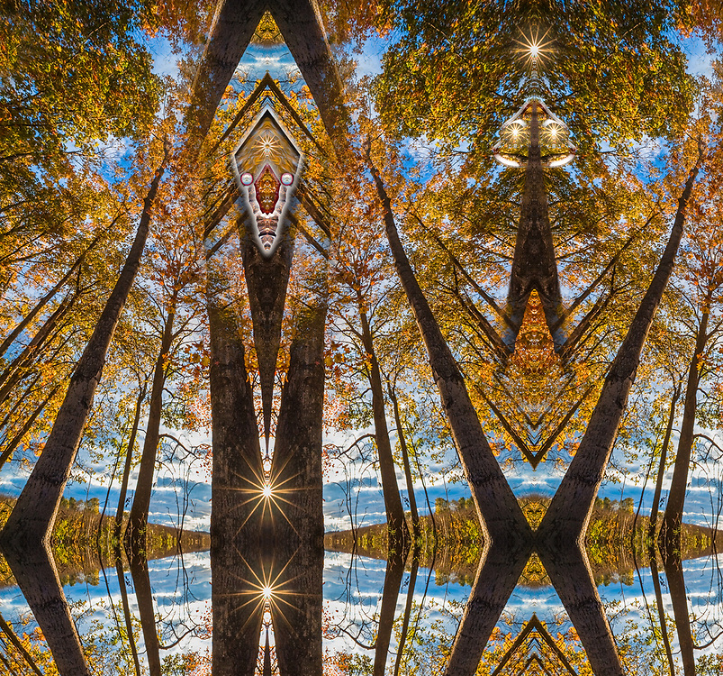 """""""Calisthenics 2"""", derivative image from a photo of maple trees (Acer species), afternoon light, October, Emmet County, Michigan, USA"""