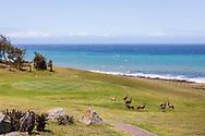 06-11-2017 Foto's genomen tijdens een persreis naar Buffalo City, een gemeente binnen de Zuid-Afrikaanse provincie Oost-Kaap. West Bank Golf Club - Blesbokken
