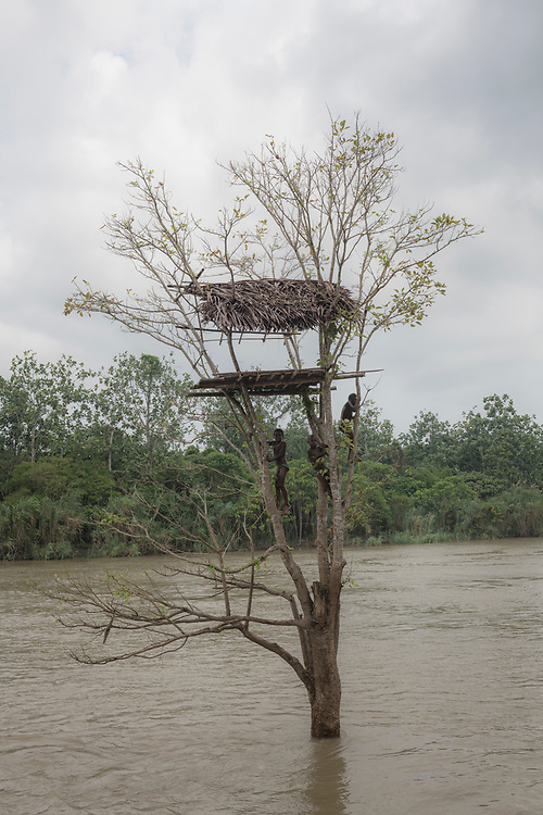 Children climb a tree in the swollen waters of the Karem River in Yar village, located in East Sepik Province, Papua New Guinea. (June 23, 2019)