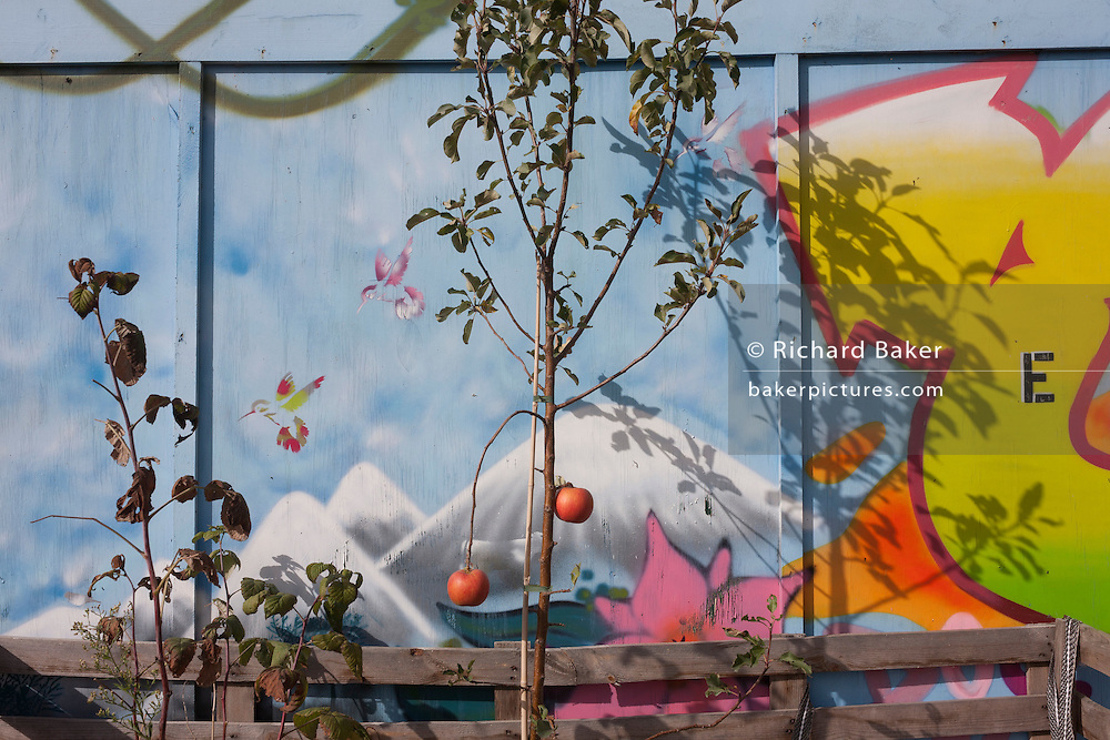 Artwork and growing apples at the fence of the Grow Elephant Community Garden, on the new kent Road at Elephant & Castle, Southwark.