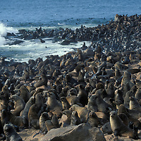 Namibia, Cape Cross Seal Reserve, Southern Fur Seals on rocky shore (Arctocepalus pusillus)