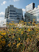 The IAC Building (left) at 555 W 18th Street and 520 West Chelsea by Annabelle Seldorf seen from the High Line. The IAC building is one of the few new workplaces in the neighborhood.