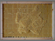 "Artist works with Bees To Create Beautiful maps of the the world using bees wax<br /> <br /> Ren Ri cooperated with bees to create art works"" Yuansu series"". Yuansu . Yuansu II, which is built on acrylic boxes, is the art work made when cooperating with bees.<br /> <br /> Ren Ri  said ""I change the gravity direction of the honeycomb every seven days by rotating the box. In the whole Yuansu series, I try to eliminate the absolute domination of the artist. Bees cooperating with artist can be seen as a relationship between human and nature'<br /> <br /> Photo shows: Map of France<br /> ©Ren Ri/Exclusivepix Media"