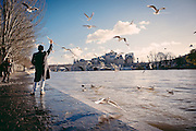 A guy throws bread at seagulls on the bank of the Seine River in Paris.