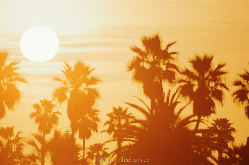 Sunset over palms at a beach in Big Sur, California, USA