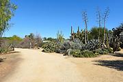 Fullerton Arboretum Cactus Garden