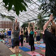 20200112 Greenhouse Yoga tif2