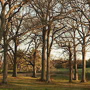 Grove of trees at Appleton Farms in ipswich and Hamilton, Massachusetts.