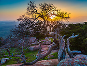 Wichita Mountains Wildlife Refuge, located in southwestern Oklahoma near Lawton, has protected unique wildlife habitats since 1901 and is the oldest managed wildlife facility in the United States Fish and Wildlife Service system. Measuring about 59,020 acres (238.8 km2), the Refuge hosts a great diversity of species: 806 plant species, 240 species of birds, 36 fish, and 64 reptiles and amphibians are present. The refuge's location in the geologically unique Wichita Mountains and its areas of undisturbed mixed grass prairie make it an important conservation area. The Wichitas are approximately 500 million years old.