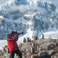 A tourist photographs Gentoo Penguins in a rookery surrounding Port Lockroy Museum on tiny Goudier Island, Antarctica.  Behind is Mount Luigi, highest of the Seven Sisters of Fief in the Fief Mountains on Wienke Island.