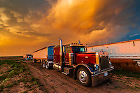 Tractor trailer carrying wheat (grain) just harvested, Schields & Sons, Goodland, Kansas USA.