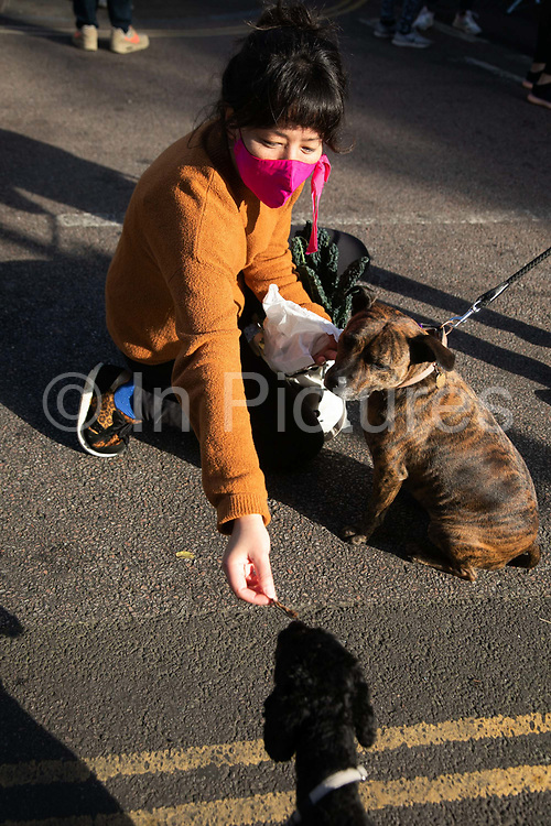 A woman wearing a pink face mask with her dog and vegetable shopping in Broadway Market during the second coronavirus national lockdownon on 7th of November 2020, East London, United Kingdom. A passing dog gets a treat. The UK Government introduced a 4 week lockdown from November 5th - December 2nd to combat the coronavirus outbreak. It is the third day of the national lockdown restrictions mean that people are only allowed to meet outside, in pairs and only if keeping social distance. Only if they already live together or have formed a social bubble can they interact freely.
