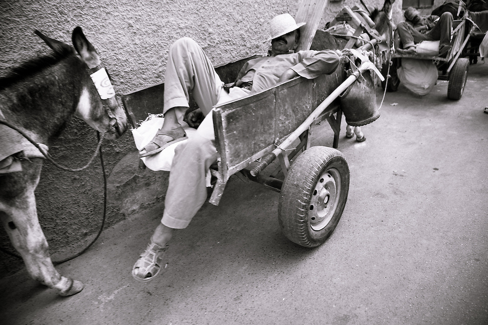 Sleeping worker with his donkey, Marrakech, Morocco.