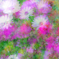 Multiple exposure of Osteospermums (African daisy) flowers in which numerous exposures were layered to create a single image in-camera.