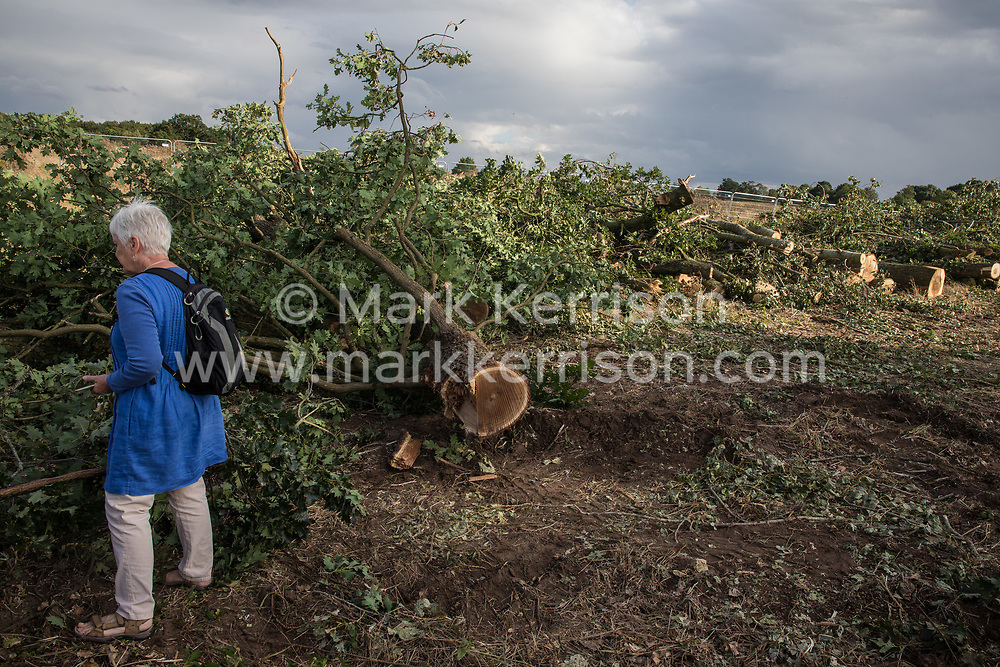 Offchurch, UK. 24th August, 2020. A local resident and anti-HS2 activist examines trees felled alongside the Fosse Way as part of works in connection with the HS2 high-speed rail link. Environmental activists based at wildlife protection camps in Warwickshire have been trying to prevent or delay the felling of large numbers of trees in connection with the £106bn HS2 high-speed rail link, which will destroy or significantly impact many irreplaceable natural habitats including 108 ancient woodlands.