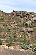 The ancient dry-stone walls of Pantelleria reveal a landscape devoted to Zibibbo grapes and capers.