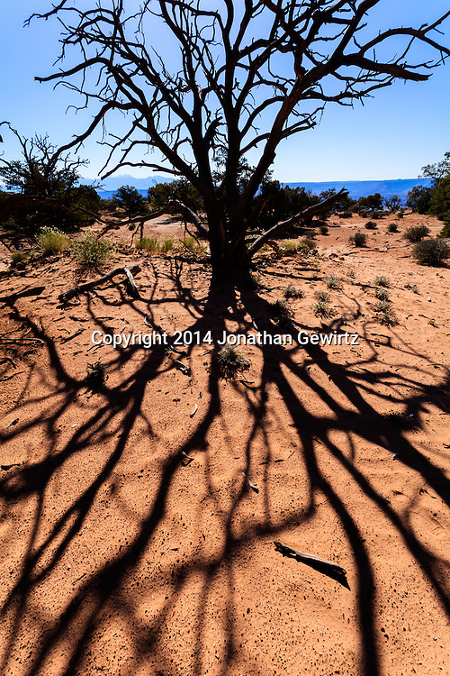 A tree's shadow branches like a root system under harsh desert sun Near Mesa Arch in Canyonlands National Park, Utah. WATERMARKS WILL NOT APPEAR ON PRINTS OR LICENSED IMAGES.