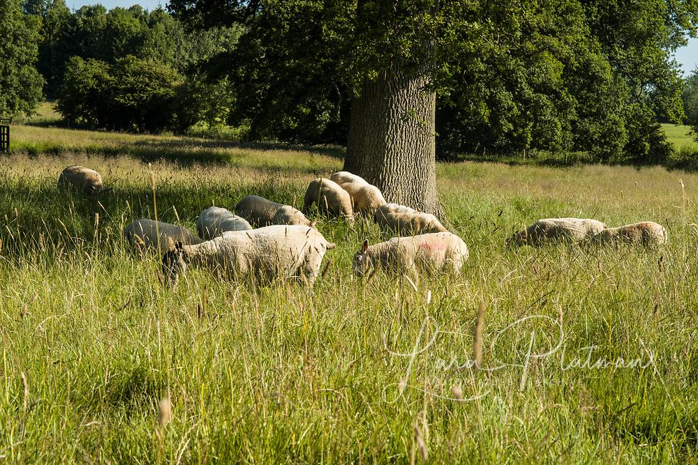 Old Farm Dorn