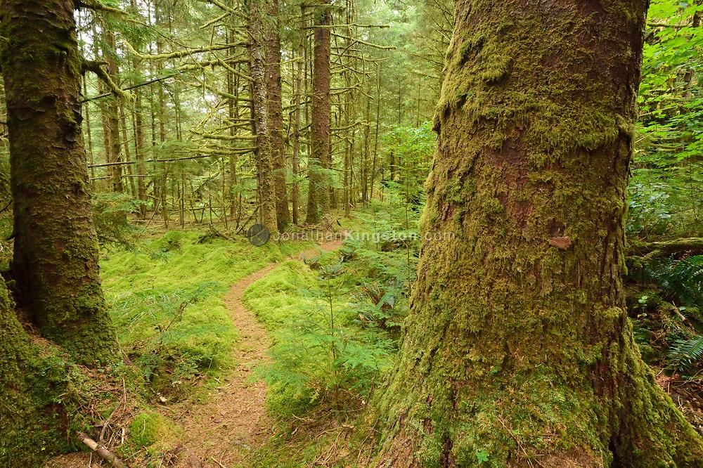 Trail through the temperate rainforest of SGang Gwaay or Anthony Island, Haida Gwaii, British Columbia.