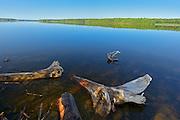 Driftwood along the Saint John River <br /> Mactaquac Dam<br /> New Brunswick<br /> Canada