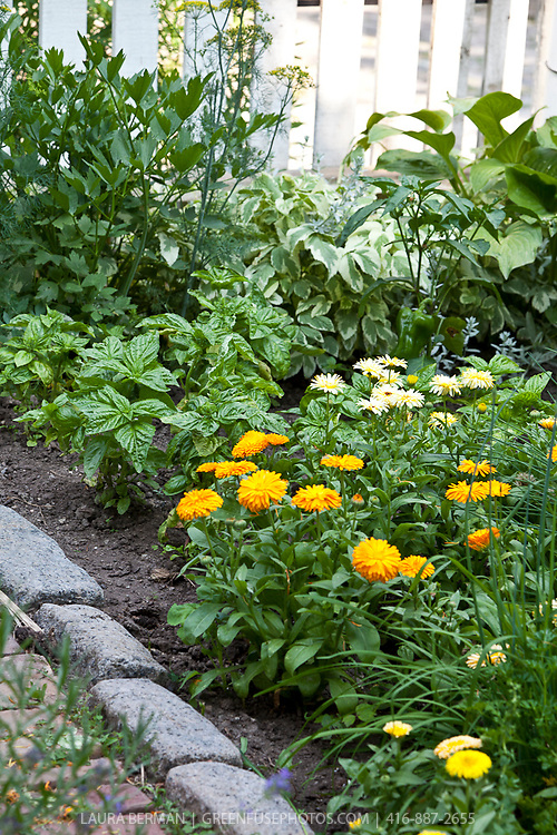 Mixed kitchen garden  with calendula, basil, parsely and chives.