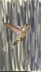 A hummingbird flies in front of a wood grain wall
