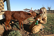 Girl with baby calf.