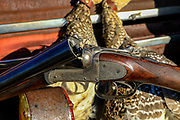 Close-up of the author's Webley screw-grip side-by-side with sharptailed grouse in Montana.