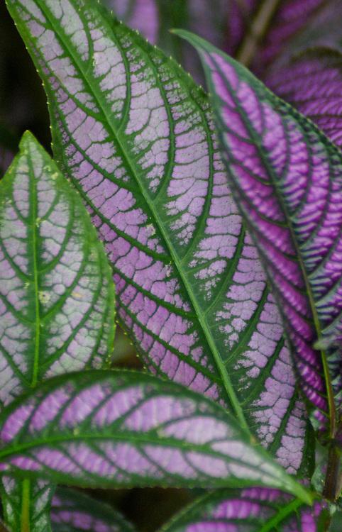 Costa Rica rainforest plant design Costa Rica