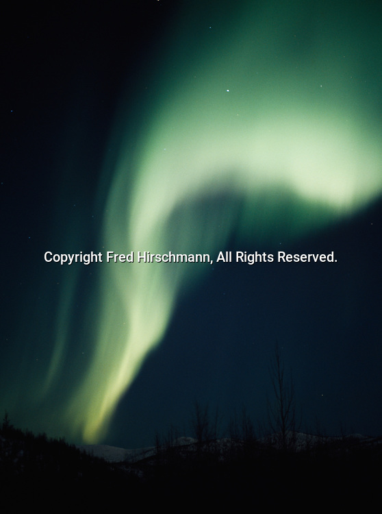 Northern lights over boreal forest east of Fairbanks, Chena River State Recreation Area, Alaska.