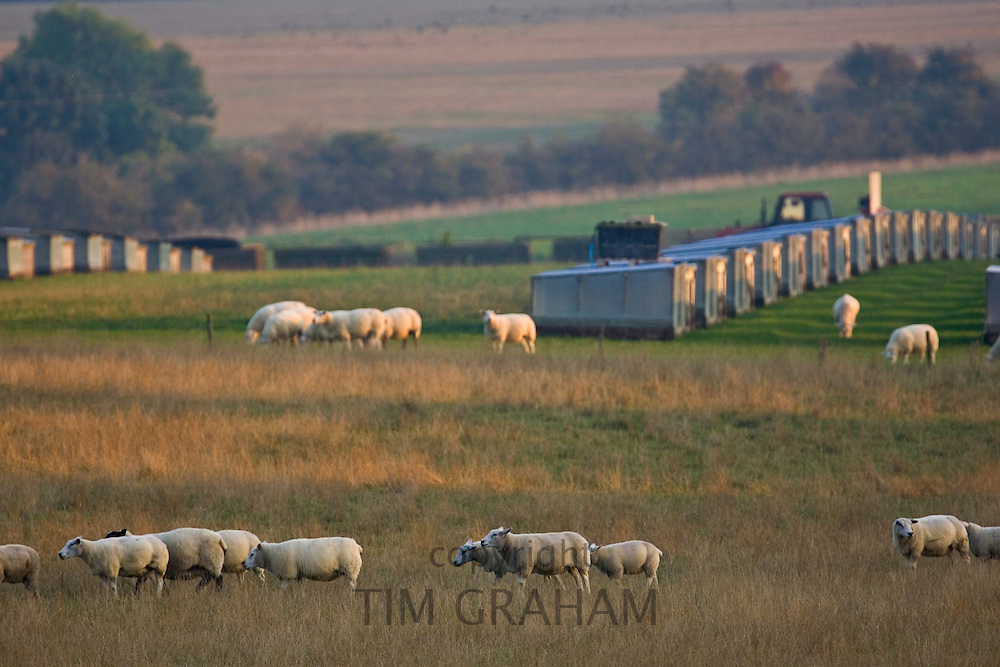 Sheep grazing in a meadow alongsidegame pens for rearing birds for shooting, Gloucestershire, England