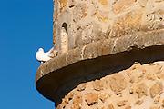 A white dove standing on a ledge of an old stone dovecote dove house against a clear blue sky - Chateau Carignan, Premieres Cotes de Bordeaux