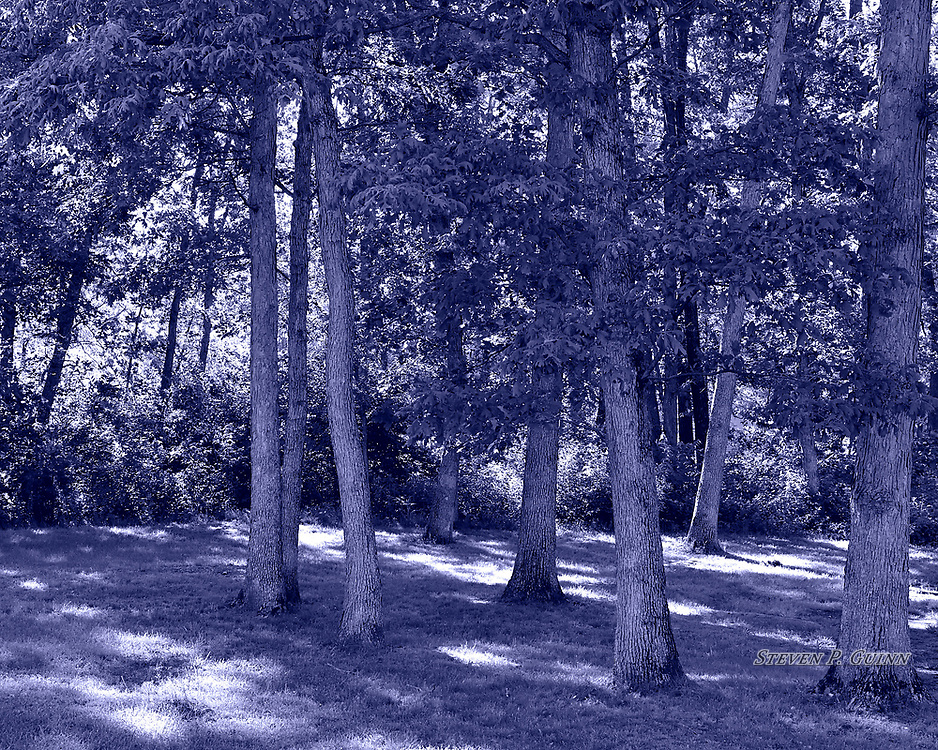 """I captured this nature portrait in my backyard on May 31st, 2017. On this day, I was walking around my backyard taking test photos to experiment with different types of split-toning. What caught my eye about this one was the way the sunlight was shining through the woods, backlighting the scene. I chose cyanotype split-toning because it gives the leaves and trees better contrast to the sunlight, and it looked more surreal than a standard black and white or sepia split-toned image. Another element that like about this scene is the way the trees are spaced out in rows, plus the backlit foliage, give the scene very good depth.<br /> <br /> Printed on Hahnemühle German Etching paper. Limited to 150 productions per size.<br /> <br /> Framed prints are available in 20"""" x 16"""", 30"""" x 24"""", 40"""" x 30"""", and 50"""" x 40"""" sizes."""