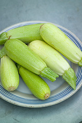 Freshly harvested courgettes on a plate. Courgette 'Bianca' - Cucurbita pepo