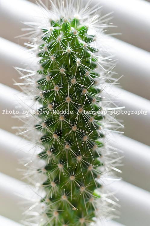 Cactus - Apr 2011