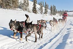 Dogmushing at Uncommon Journeys in the Ibex Valley near Whitehorse, Yukon, Canada