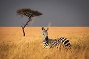 Kenya, Masai Mara, 2011
