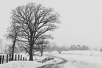 https://Duncan.co/tree-and-barn-in-the-fog