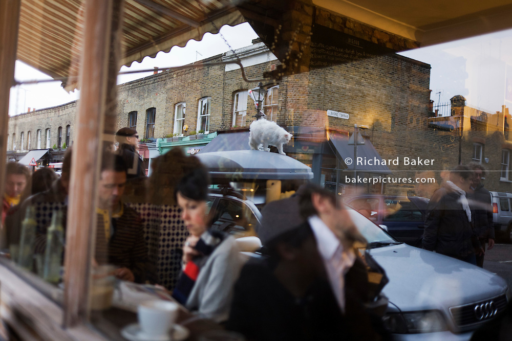 A white cat and cafe customers are reflected in the window of Campania Gastronomia cafe on Columbia Street and Barnet Grove.