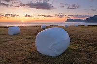 Wrapped hay bales sit in coastal field under July midnight sun, Flakstadøy, Lofoten Islands, Norway