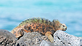 Galapagos extras