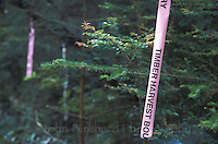 Logging tape attached to trees, Mendocino California