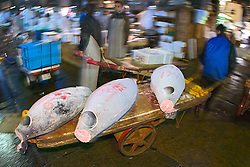 frozen tunas, Thunnus sp., on cart, being transported to a small wholesale store to be processed for retailing immediately after auction, Tsukiji Fish Market or Tokyo Metropolitan Central Wholesale Market, the world's largest fish market, hadling over 2,500 tons and over 400 different kind of fresh sea food per day