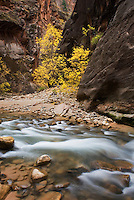 Zion Canyon Narrows, Zion National Park Utah USA