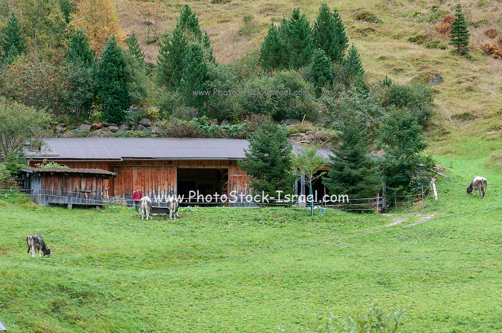 Wooden remote farmhouse in Stubai Alps, Tyrol, Austria