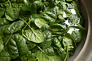 spinach being washed after harvest