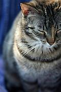 Straßen- und Hauskatze Speedy in einem Korb im Garten.<br /> <br /> Street- and housecat Speedy in a basket in the garden.