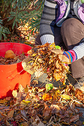 Sweeping up leaves from the patio and putting them in a tub trug